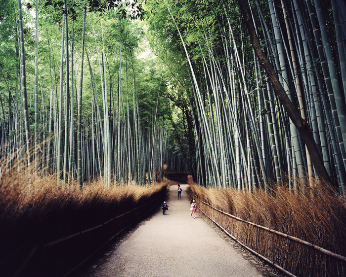 Bamboo Forest outside of Kyoto, Japan.