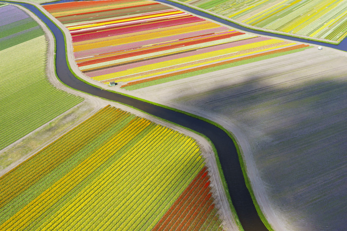 A drone view over tulip fields outside Voorhout, The Netherlands.