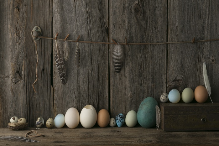 Eggs, feathers, and birds nest.